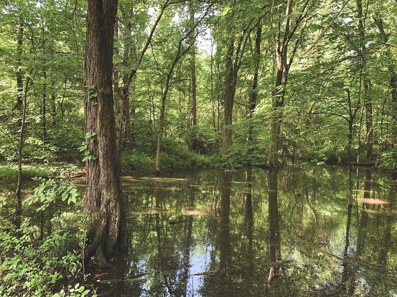 "A ""Swampy"" Area"