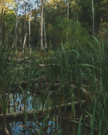 A Small Pond along the Trail