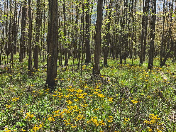 More wildflowers in the marsh