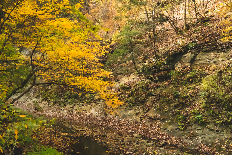 View along the Clifty Creek