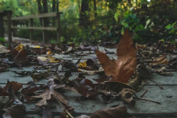 Fallen Leaves along a Boardwalk