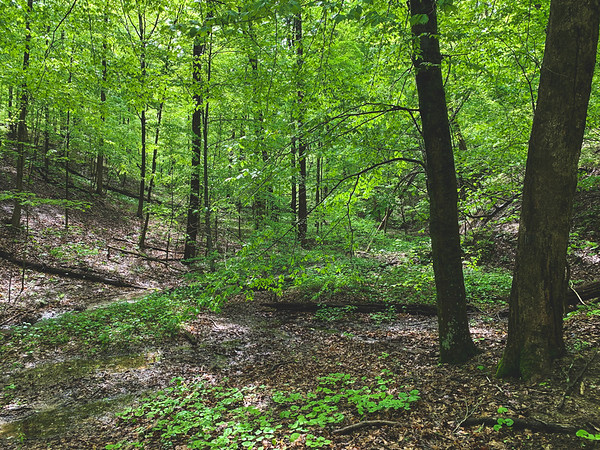 The Forest within the American Beech Woods Nature Preserve
