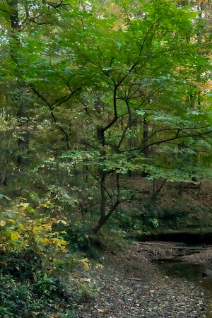 View of the Woods and Stream