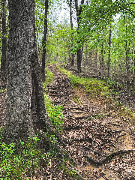 The washed-out, muddy hill along the Sand Ford Nature Trail