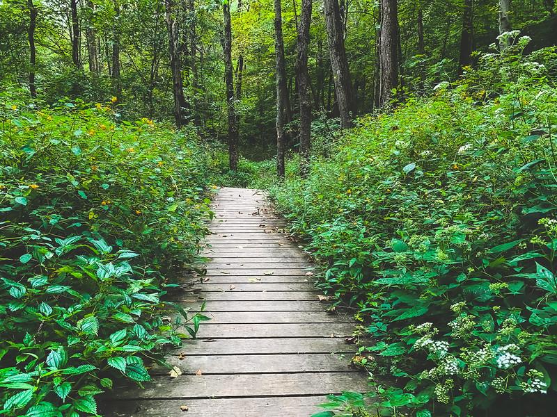 Boardwalk along the Trail