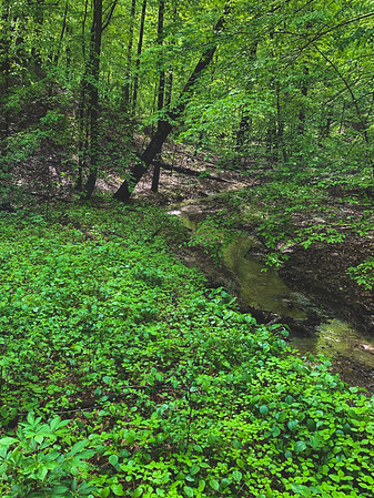 A Stream within the American Beech Woods Nature Preserve