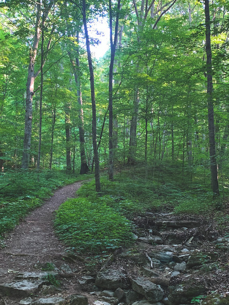 The Trail and a Dry Stream Bed