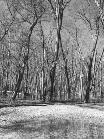 Trail #8