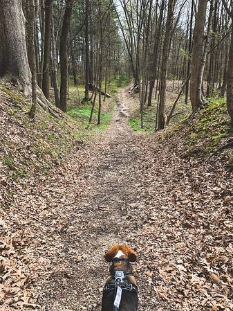 Dexter along Trail 6!