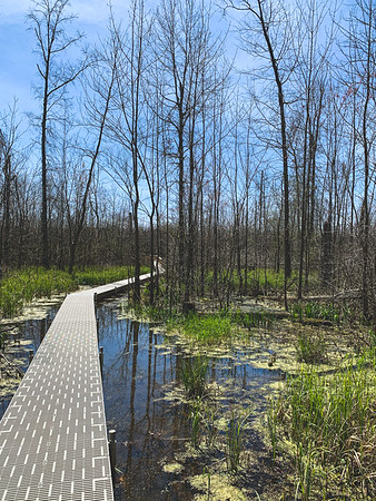 The Plastic Deck Boardwalk in the Marsh