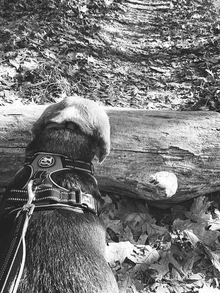 Dexter along the trail!