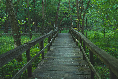 A Bridge through a Swamp