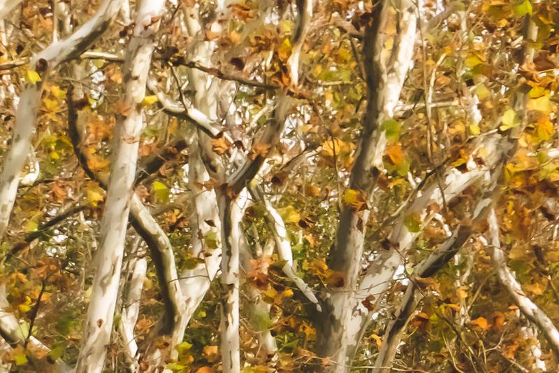 Fall Tree Close-up