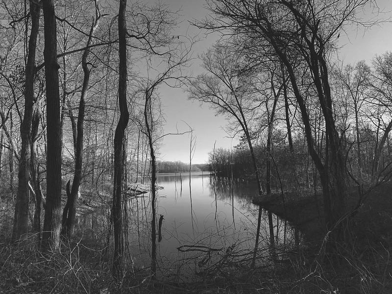 A cove within Lake Kickapoo