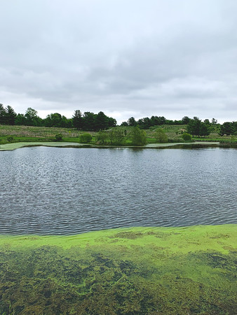 The Second Pond