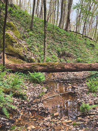 The Stream leading from the Waterfall