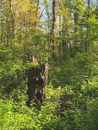 The Stump looks like a face!