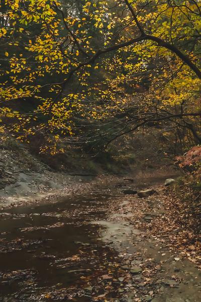 Along Clifty Creek