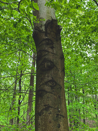 """Eyeball"" Tree"