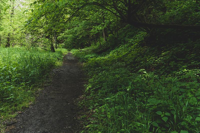 Along the Portland Arch Trail