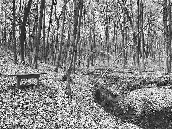 A bench overlooking a stream in the woods