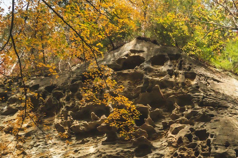 """The """"Honeycomb Rock"""" portion of the preserve"""