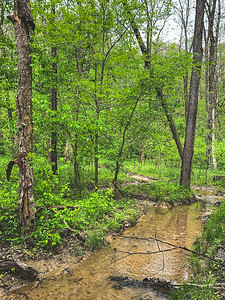 The Sand Ford Nature Trail that nature has reclaimed as a stream