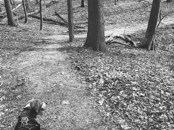 Dexter enjoying the hike!