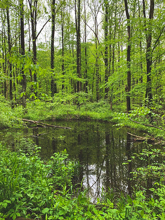 A Small Pond along the Sand Ford Trail