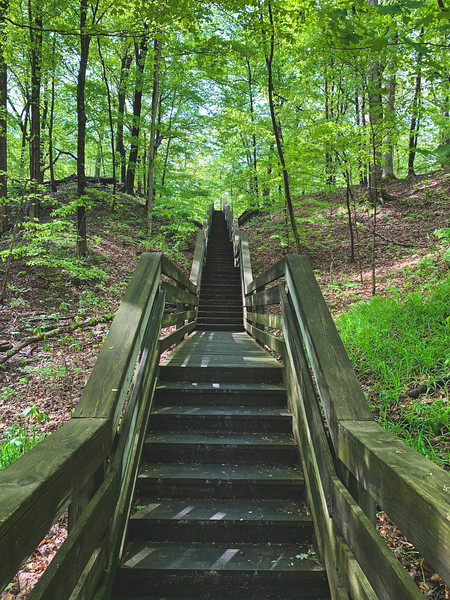 Beech Woods Trail Staircase (view from the bottom)