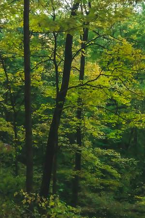 The Fall Foliage!