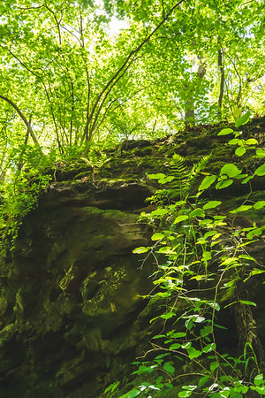 Greenery on the Sandstone Cliff