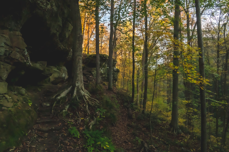 Cliffs and Trees