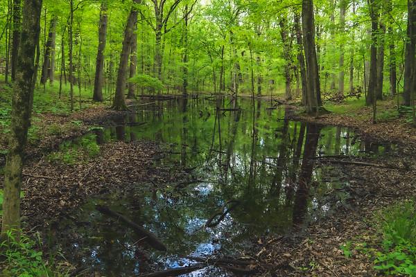 A Pond along the Portland Arch Trail