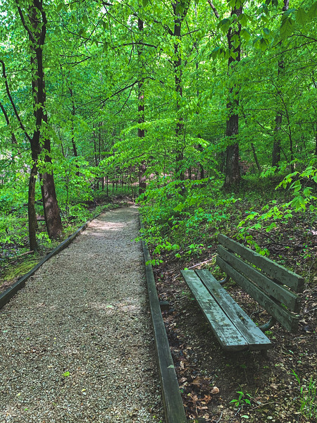 Bench within the American Beech Woods Nature Preserve