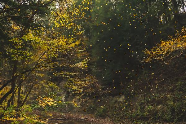 Falling Leaves along Clifty Creek