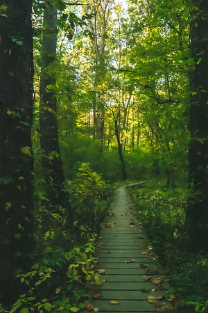 The Boardwalk along the Trail