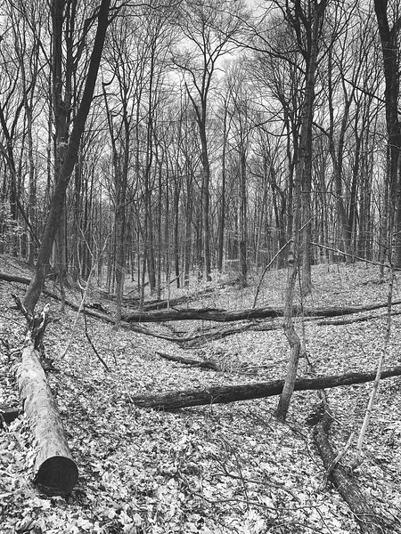 A ravine in the woods