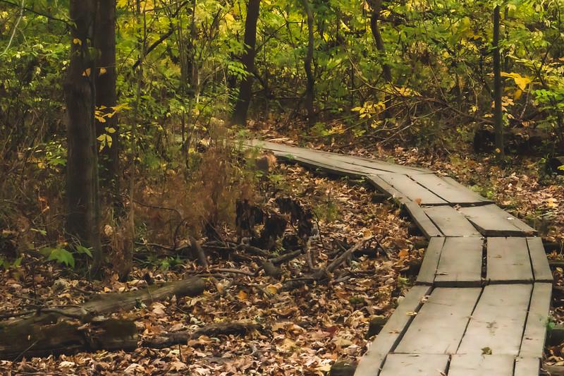 A Boardwalk along the Trail
