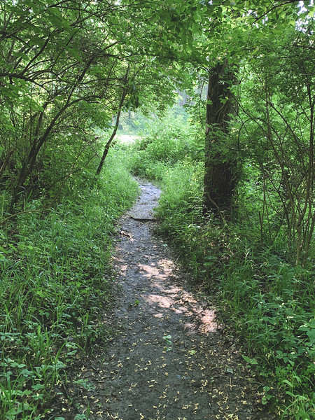 Trail leading to the Wetlands