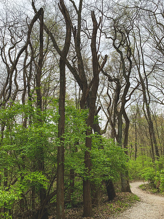 Twisty Trees along the Trail
