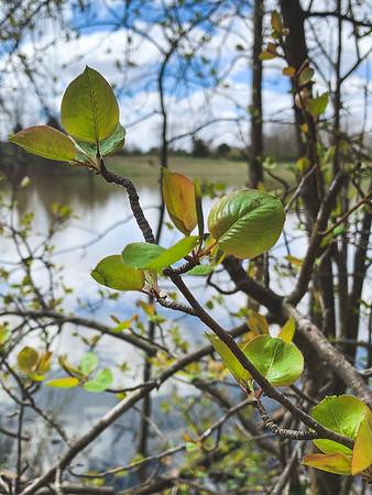 Green leaves!