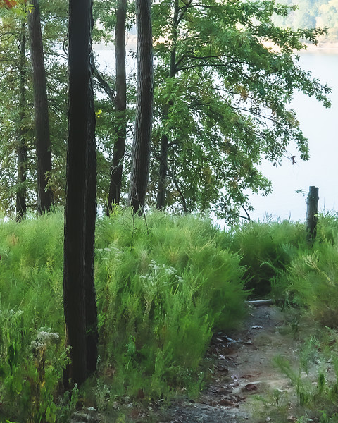 A Trail leading to the Lake