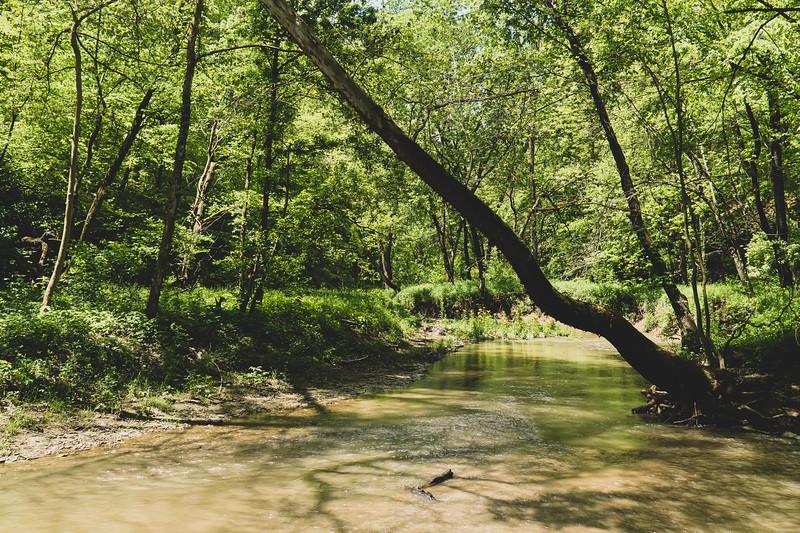View of Bear Creek