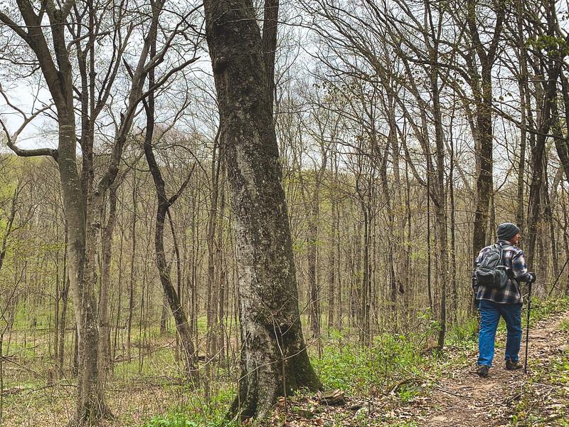 Tracy has my walking stick to hunt mushrooms.