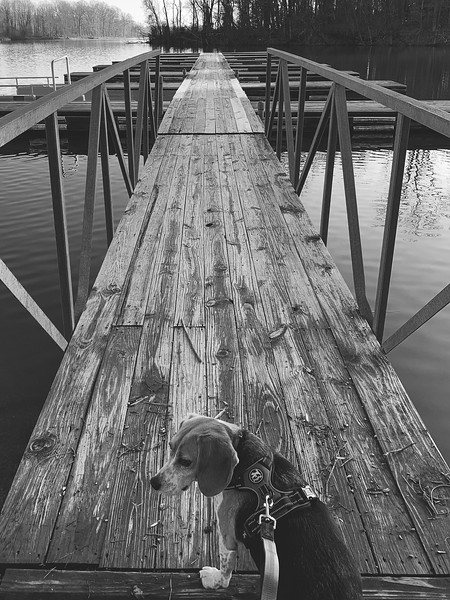 Dexter exploring the Lake Kickapoo boat dock