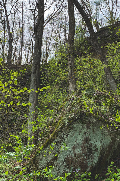 Greenery among the Rocks