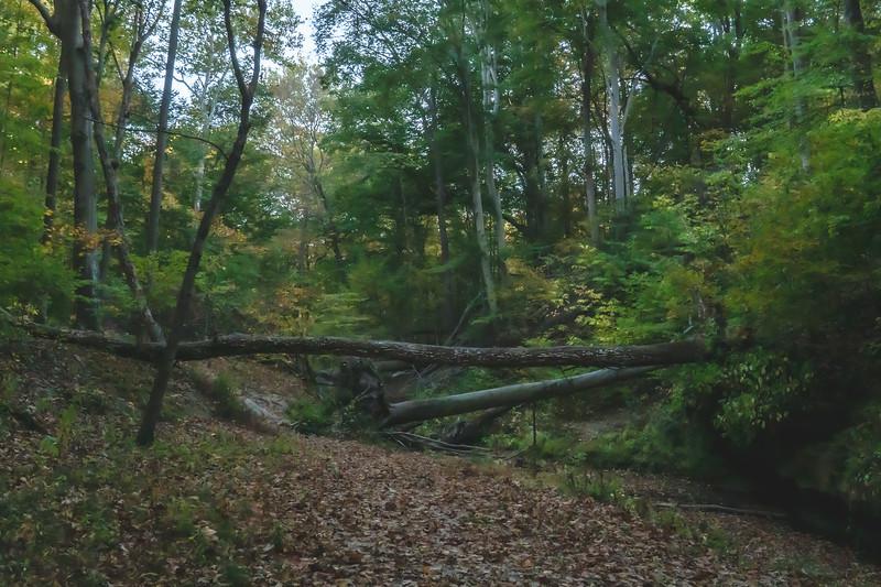 Fallen Trees across the Stream