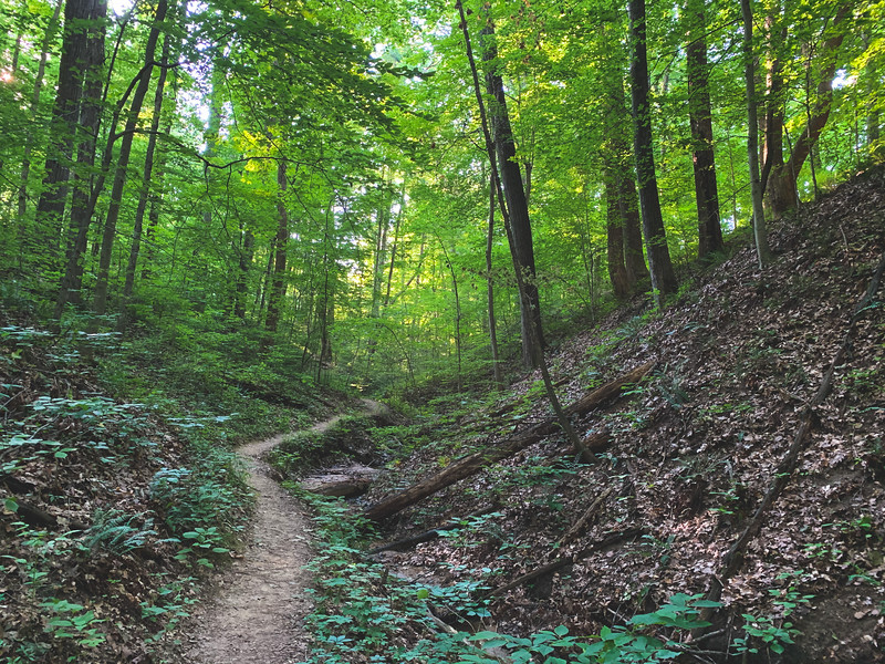 The Trail in the Ravine