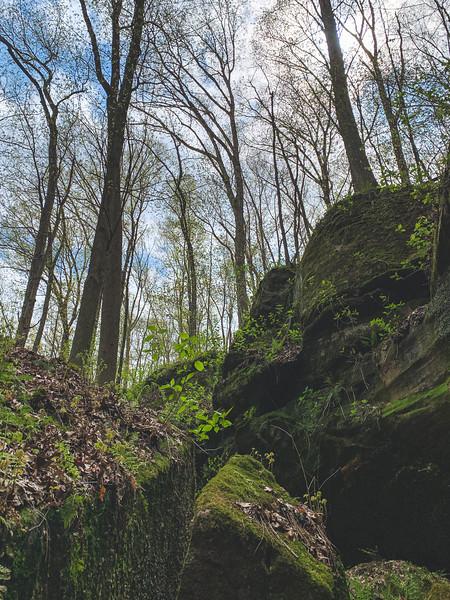 Moss-Covered Rocks